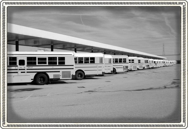 White buses lined up